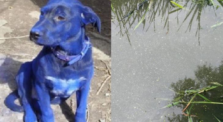 В Юрьевце взяты пробы воды из ручья, в котором посинела собака