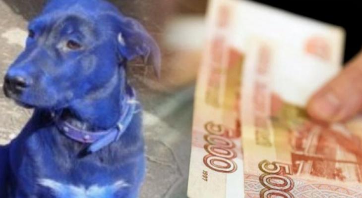 Главные новости этого дня: посиневшая собака и новые выплаты