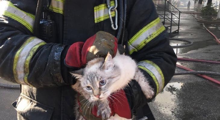 Ковровские пожарные спасли котов из горящего дома