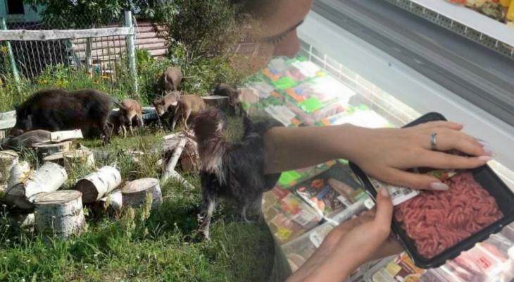 """Новости минувшего дня: """"набег"""" кабанов на деревню и налог на мясо"""