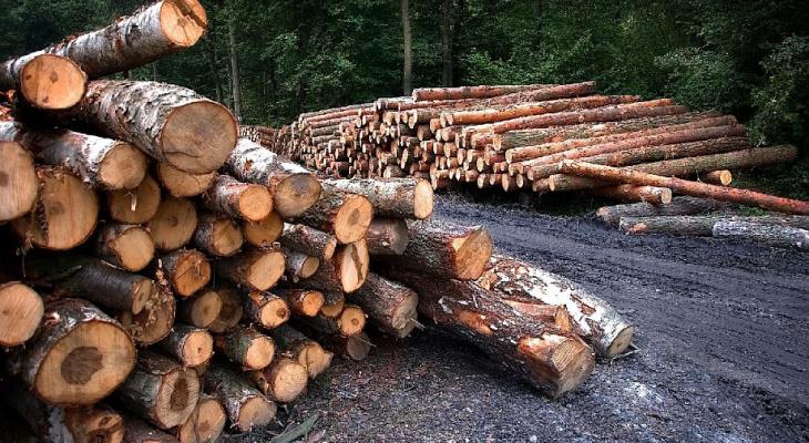 Житель Суздаля незаконно продал древесину на сумму почти 10 млн рублей